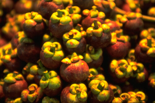 [Picture of Mangosteen]